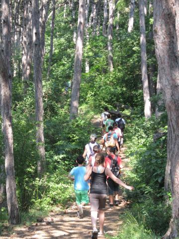 Wanderung durch den Föhrenwald