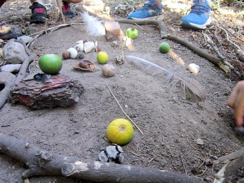 Waldpädagogik Cirali Waldbild
