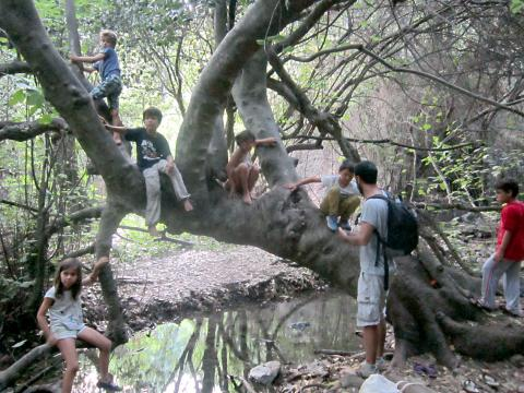 Waldpädagogik Olympos Baum